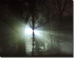 Fog, trees, and a light